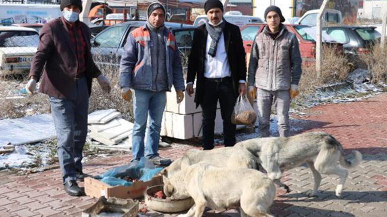 Esnaftan topladığı yiyecekleri sokak köpeklerine dağıtıyor
