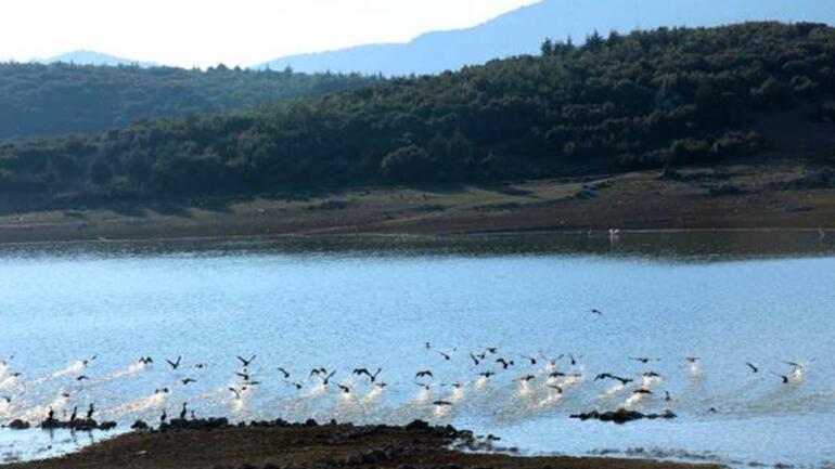 Onaç Baraj Göletinde kuş türleri artıyor