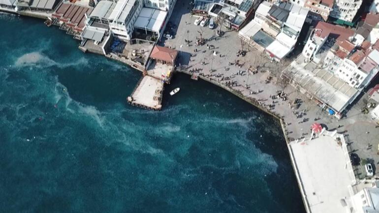 Şoke eden görüntü İstanbul Boğazı'nda denizanası istilası…