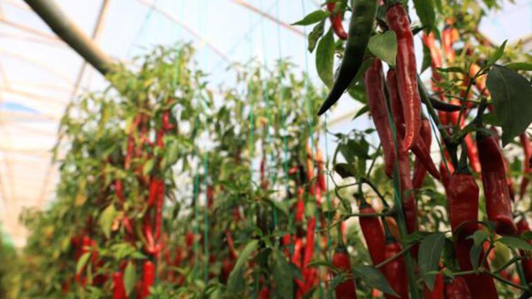 Antalyadan dünyaya sebze ve meyve ihraç ediliyor
