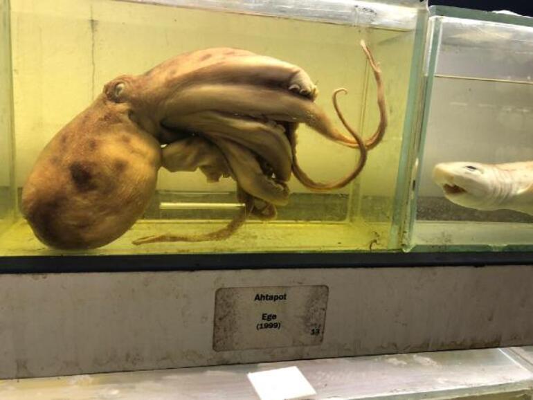 İstanbuldaki bu müzeyi çok fazla kişi bilmiyor 450den fazla balık türü sergileniyor
