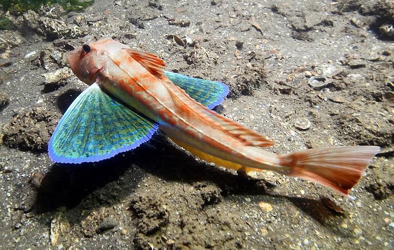 Bodrumun başı kuvars tozu ile dertte Kıyıların yüzde 40'ı Maldivler'e döndü ama...