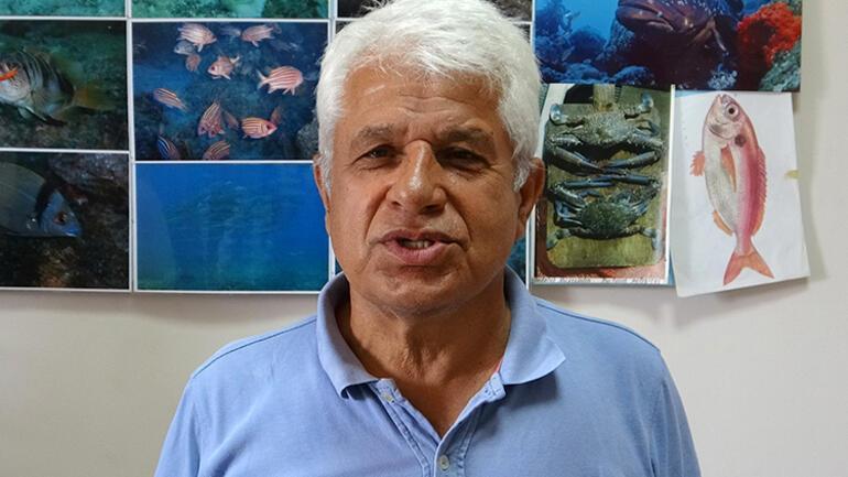 Akdenizde balon balığı tehlikesi Kıyıda görmeye alışmalıyız