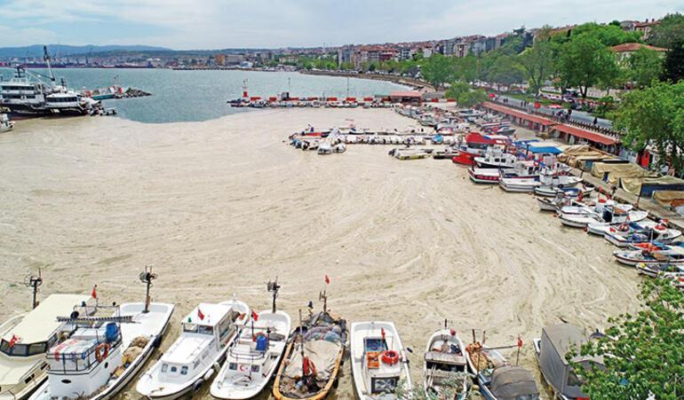 Çevre profesörü Mustafa Öztürk'ten yetkililere çağrı: Marmara'yı kurtarın