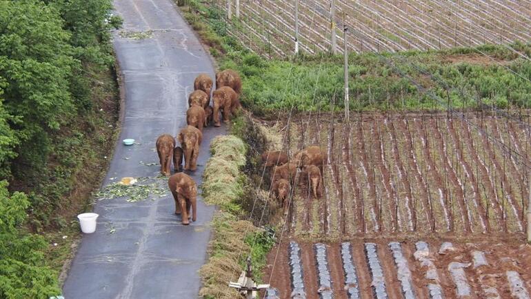 پورا ملک ان ہاتھیوں میں بند ہے وہ 15 ماہ سے سڑک پر ہیں ، وہ خوب سو رہے ہیں ، بل بھاری ہے ...