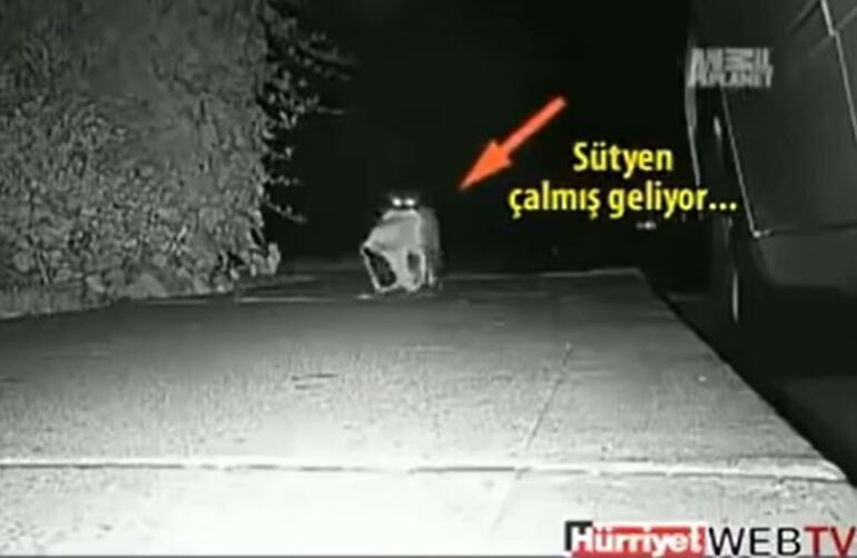 """""""Kedim bir hırsız"""": Çalıntı eşyaları bahçesindeki ipe dizdi, sahiplerini arıyor"""