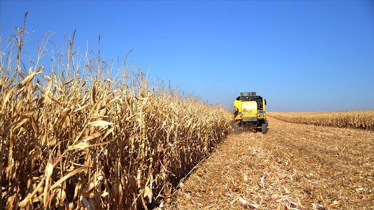Tahıl ambarı alarm veriyor... Covidden de Marmaradaki müsilajdan da daha tehlikeli