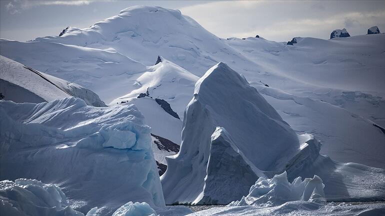 Antarktikada şaşırtan keşif... Nasıl hayatta kaldığını anlayamadılar