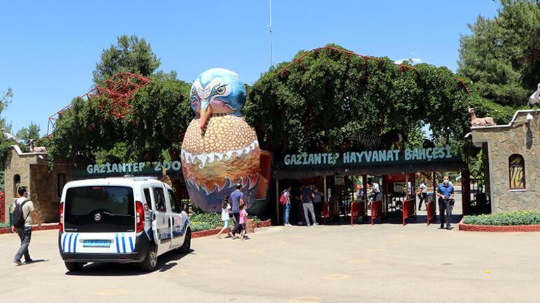 Son dakika: Gaziantepte hayvanat bahçesinde aslan bakıcısını yaraladı...