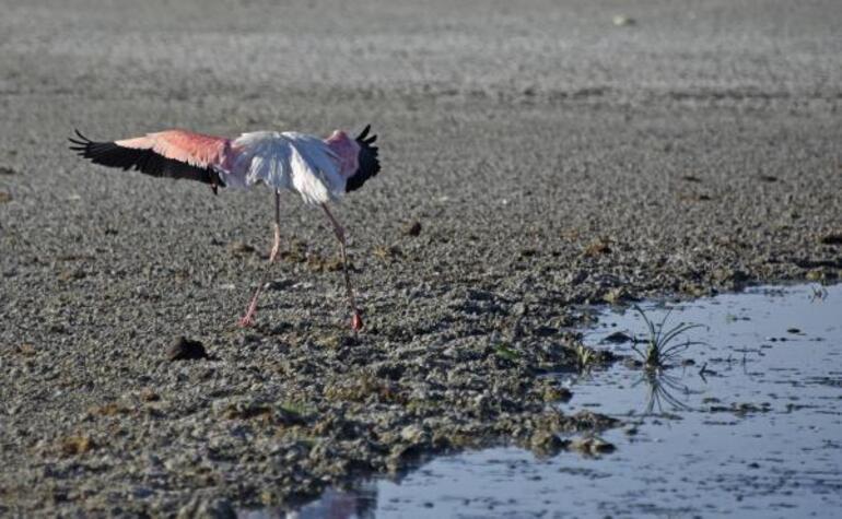 Son dakika haberler: Türkiyede kuraklık tehlikesi Olağanüstü hal ilan edilmeli