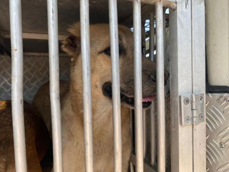Ormanda ölüme terk edilen 11 köpek tedaviye alındı