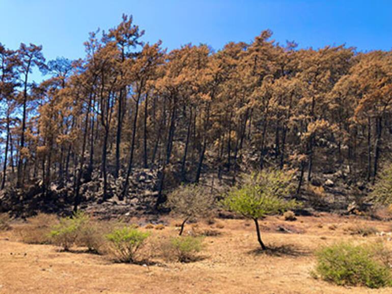 Marmariste yangınlar sonrası tabiat canlanmaya başladı