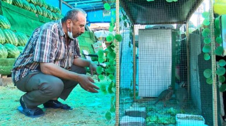 Sultangazide ilginç olay Köpekten kaçan kedi tırmanarak kafasına çıktı