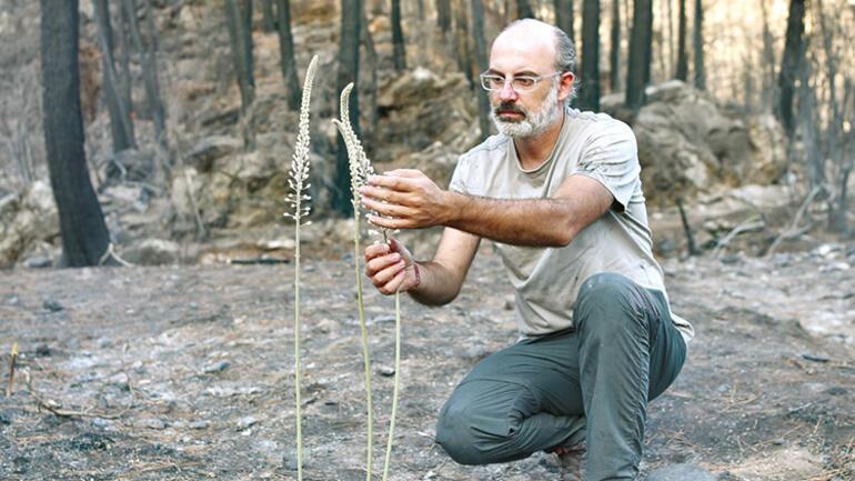 Yanan ormanlar kendilerini böyle yeniliyor: 1 ayda 1.5 metre
