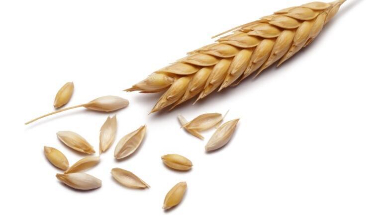 Lektin Nedir, Hangi Gıdalarda Bulunur İşte, Lektin İçeren Besinler ve Vücuda Etkileri