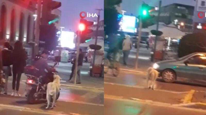 Trafik kurallarına uyan köpek
