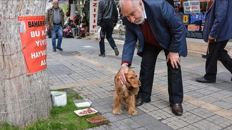 Sokak hayvanlarına evlat şefkatiyle bakıyor