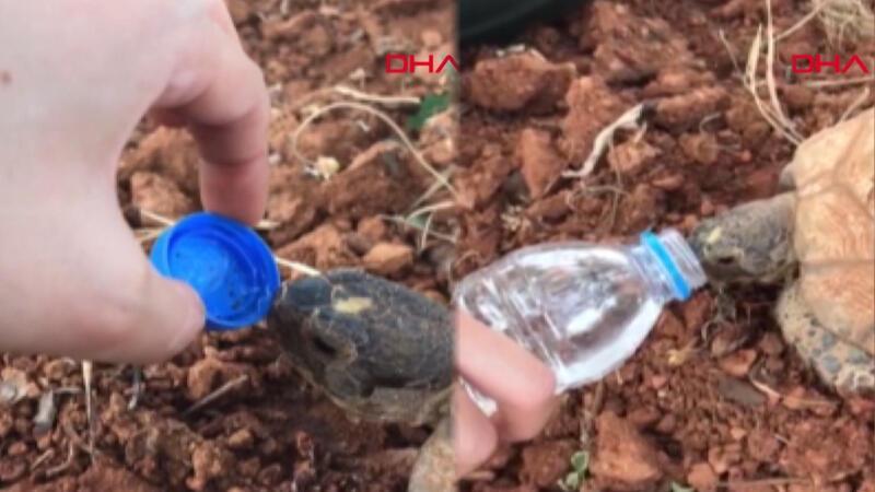 Doğasever, susuz kalan kaplumbağayla suyunu paylaştı