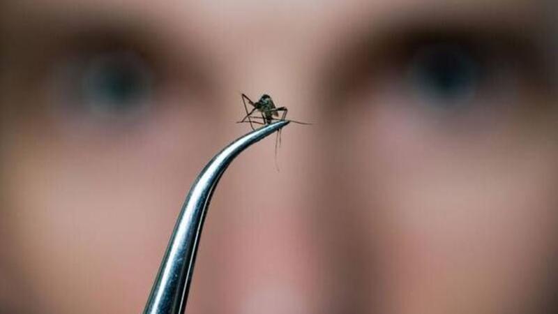 Sivrisinekleri evden uzak tutmanın yolları