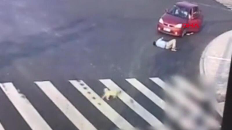 Köpekten yayalara 'trafik dersi'