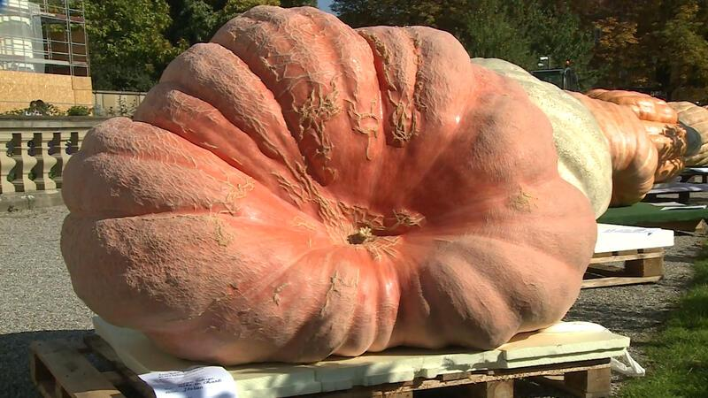 1013 kg ağırlında dev kabak birinci oldu