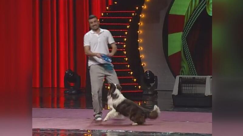Şampiyon akıllı köpek Max hayatını kaybetti