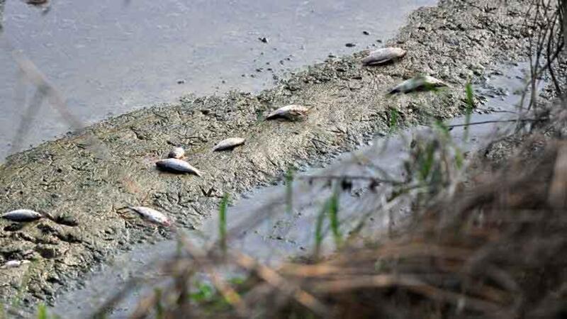 Cenup Deresi'nde toplu balık ölümleri yaşandı