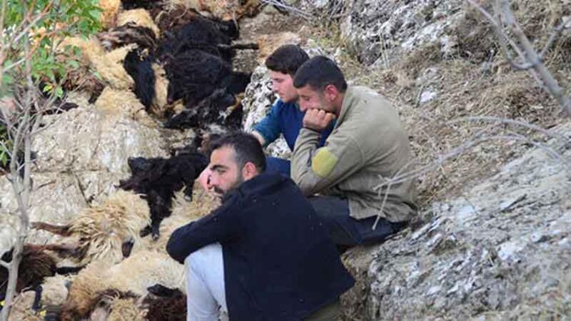 Uçurumdan düşen 315 koyun telef oldu