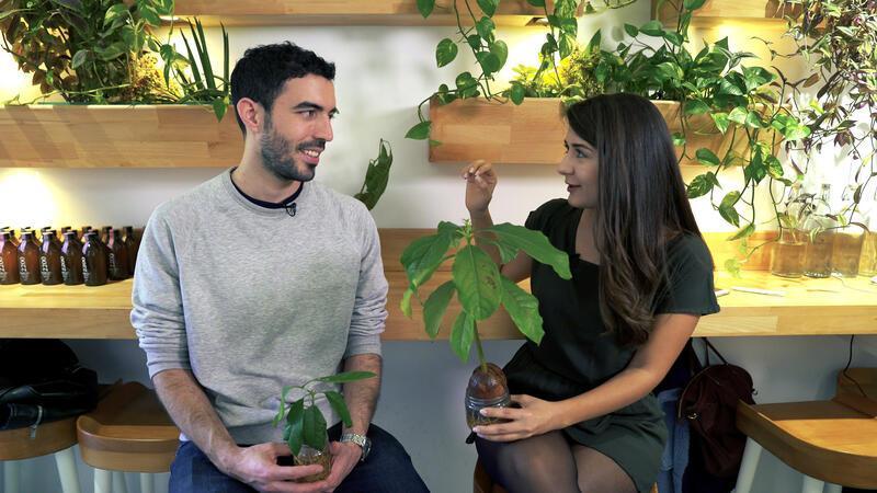 Kolombiya'dan İstanbul'a avokado