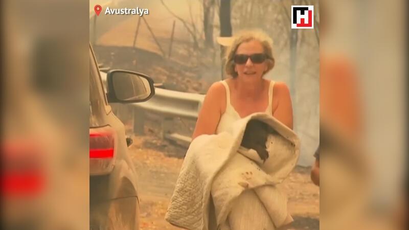 Avustralya'da bir kadın, alevlerin arasındaki koalayı kurtardı