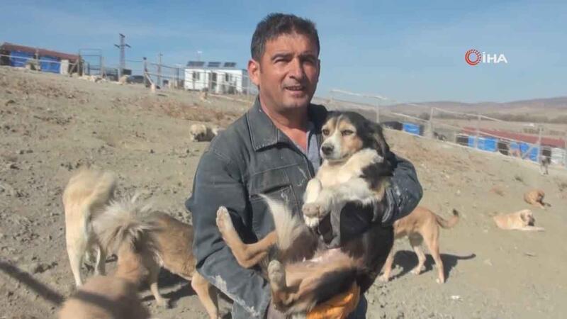 Her gün 250 köpeğin bakımını üstleniyor