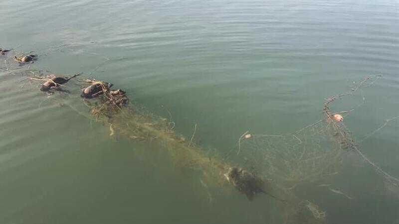 """Sapanca Gölü'nde """"hayalet ağ"""" nedeniyle ördek ve balıkların telef olmasına inceleme"""