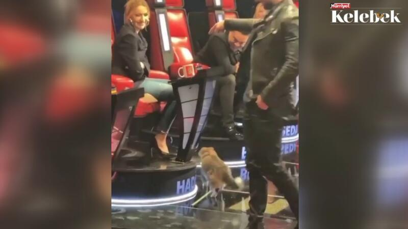 'O Ses Türkiye' stüdyosuna giren kedi Hadise'yi seçti