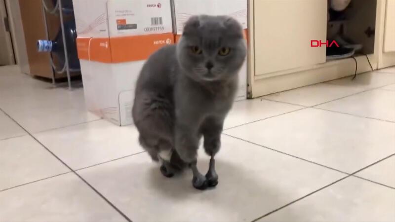Soğukta patilerini kaybeden kediye protez pati