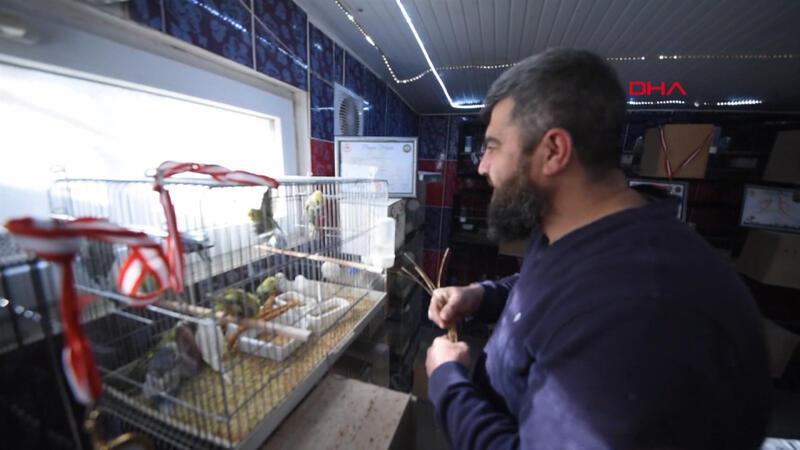 Evinde yüzlerce muhabbet kuşu besliyor