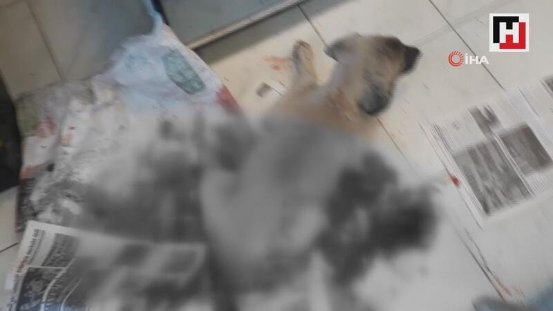 Sürücü, yaralı köpeği veterinere getirip sahiplendi
