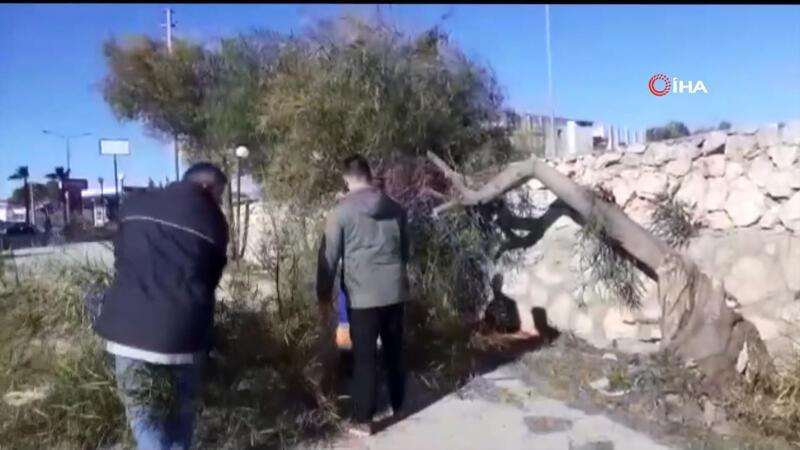 Adana'da fırtına ağaçları kökünden söktü