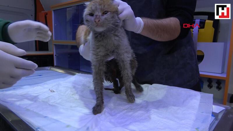 Depremzede kedi, Antalya'da tedavi altına alındı