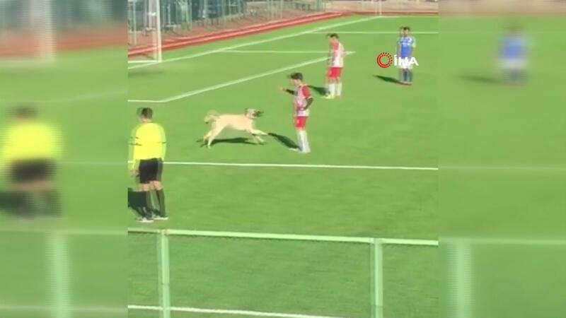 Maç sırasında sahaya giren köpek renkli görüntüler oluşturdu