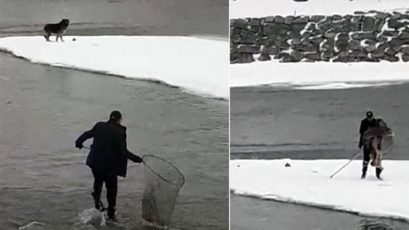 Buz kütlesinde mahsur kalan kurt köpeği için seferber oldular