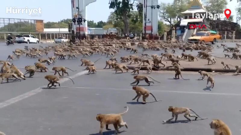 Tayland'da koronavirüs yüzünden boşalan sokakları maymunlar bastı
