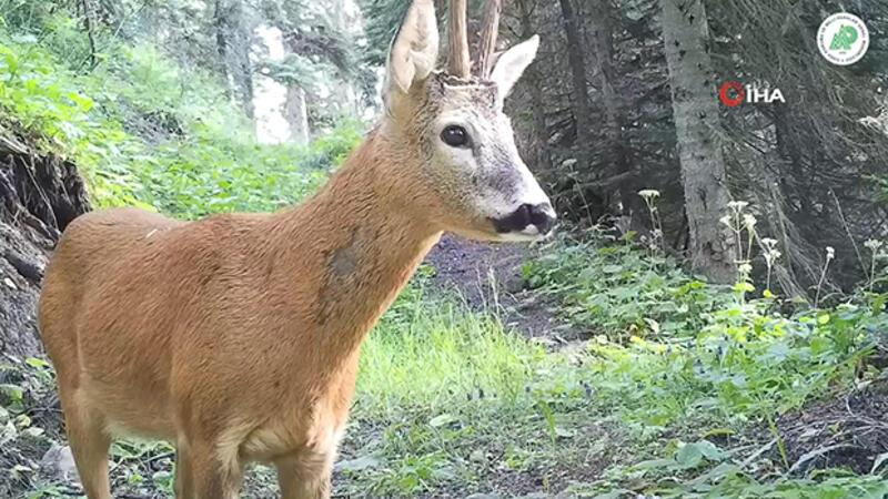 Camera traps snap photos from wildlife