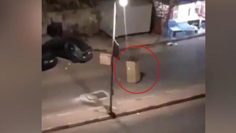Karantinadan kaçmak için karton kılığına girdi
