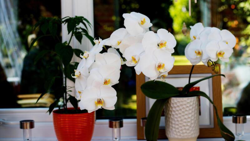 Evde bakımı kolay olan en iyi 10 bitki hangisi?