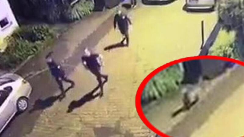 Polisler ilçe merkezine inen ayıyı kovaladı