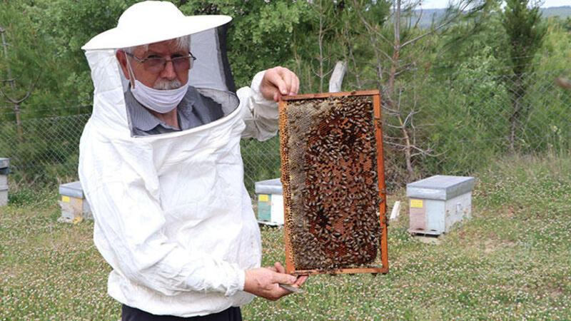 'Arı sempatik değil ama yaşamımızı sürdürmede payı çok fazla'