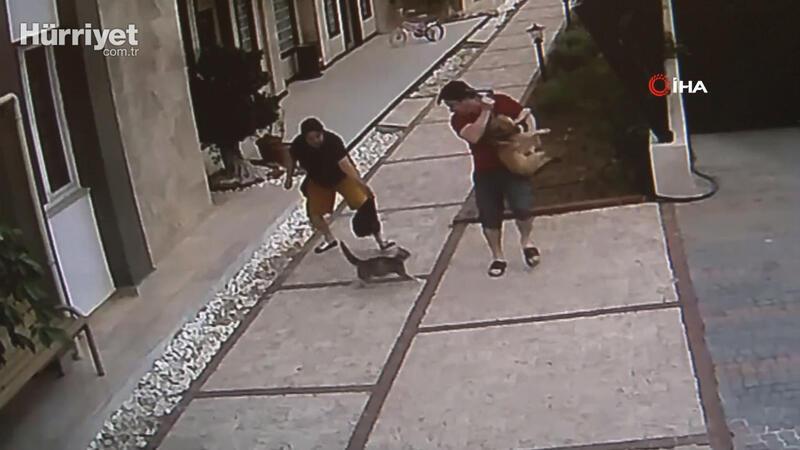 Antalya'da bir sitedeki kedi yavrularını korumak için köpekli insanlara saldırıyor