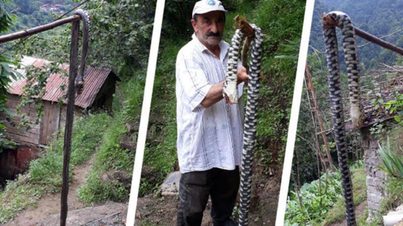 Karadeniz'de yılan tehlikesi vatandaşları tedirgin ediyor