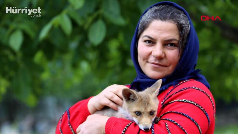Fox pays visits to its foster family in Central Anatolian province