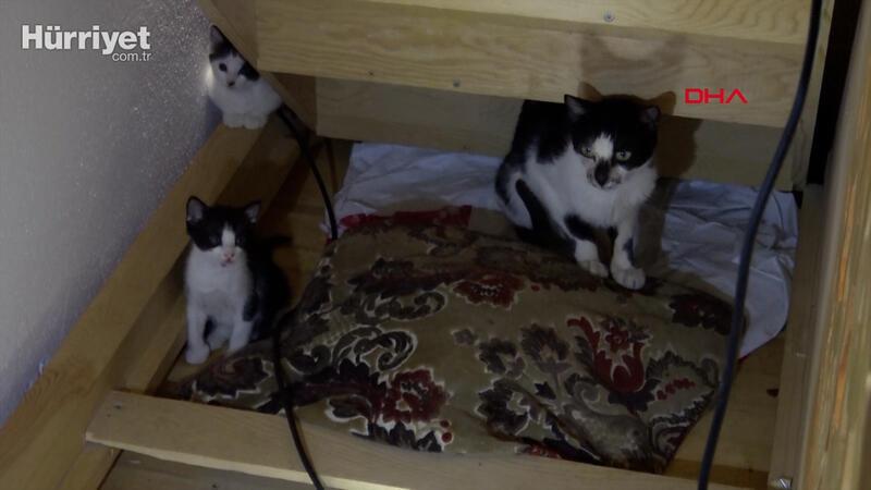 Kedi caminin minberinde doğum yaptı, imam sahip çıktı